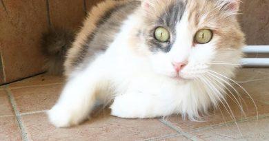 storie di gatti