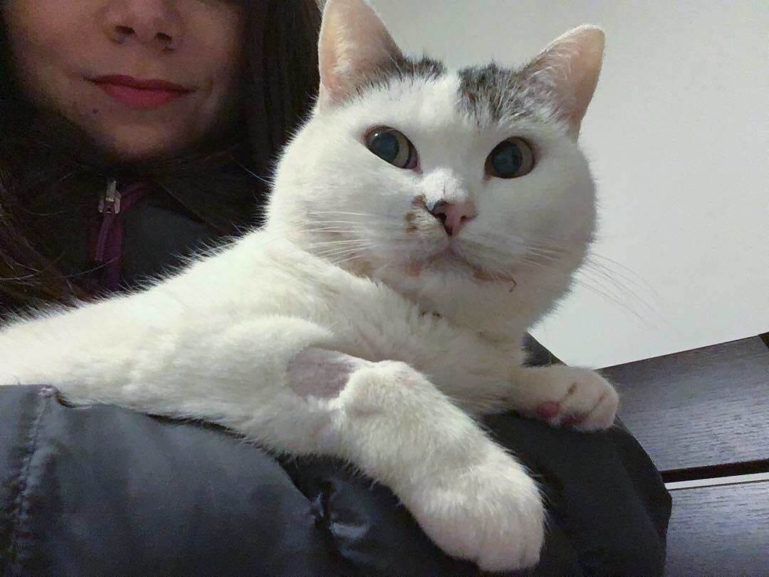 stomatite gatto cura noel dopo operazione