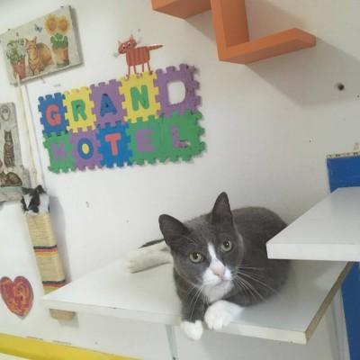 Foto di Stolky: gatta di 7 anni circa, in cerca di una casa sicura.