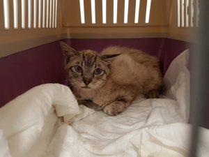 fiv felv positivo gatto leucemia felina