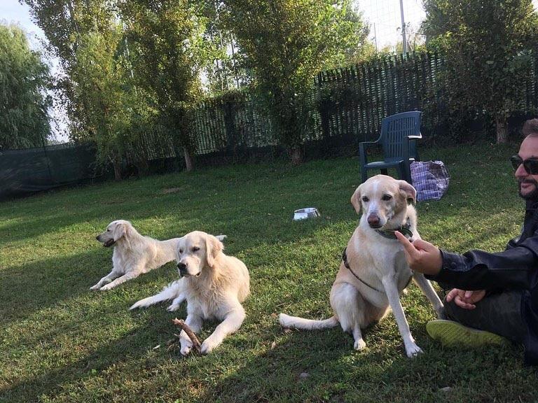 cane giallo sud pastore maremmano 9