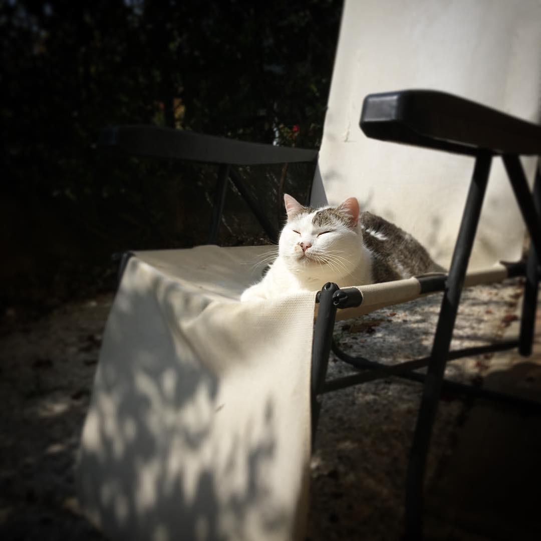 noel vita segreta gatti