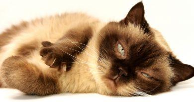 eliminare odore pipì gatto