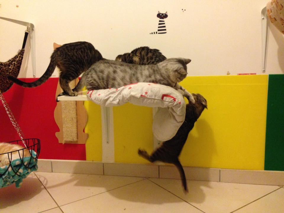 gattino ipoplasia cerebellare