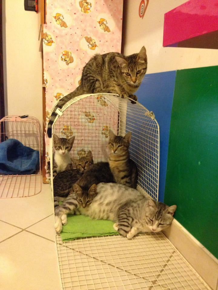 famiglia gattini ipoplasia cerebellare