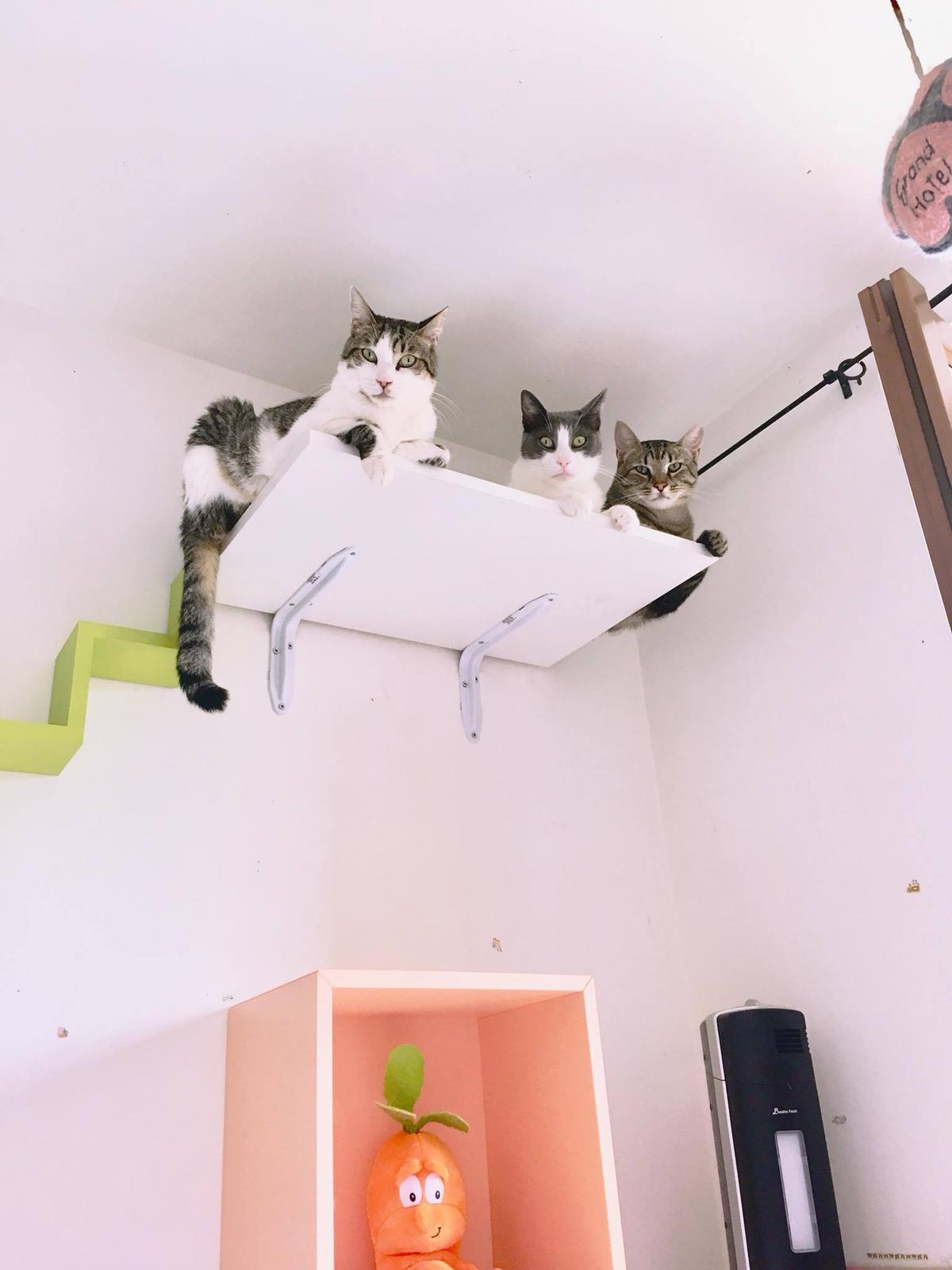 arricchimento ambientale gatti depressione