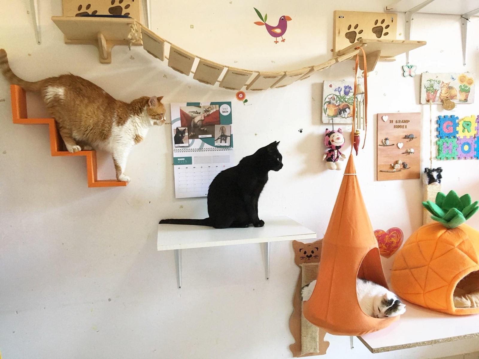 arricchimento ambientale gatto 3