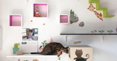 arricchimento-ambientale-gatto-depressione-copertina