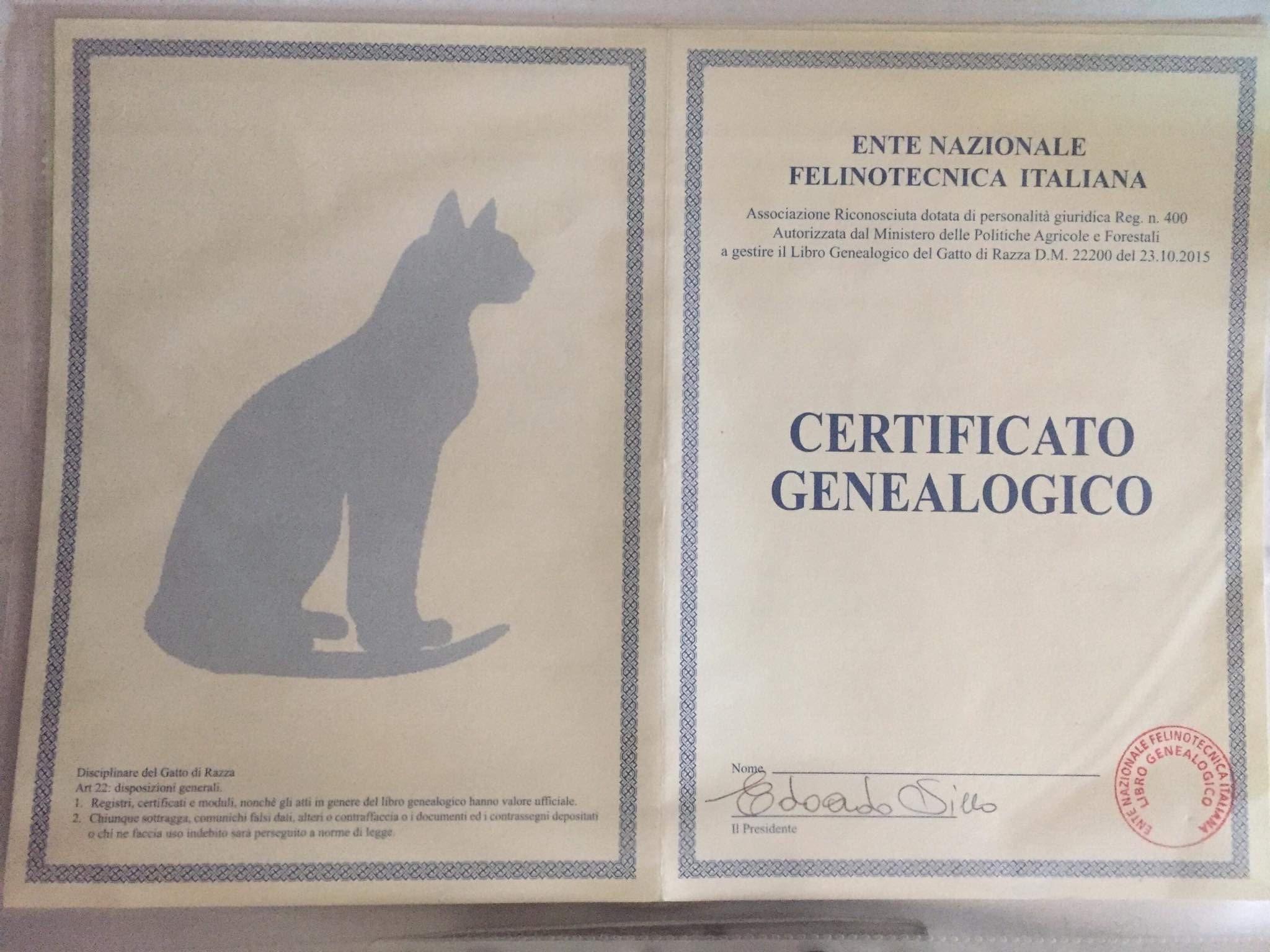 esempio pedigree gatto cane cucciolo