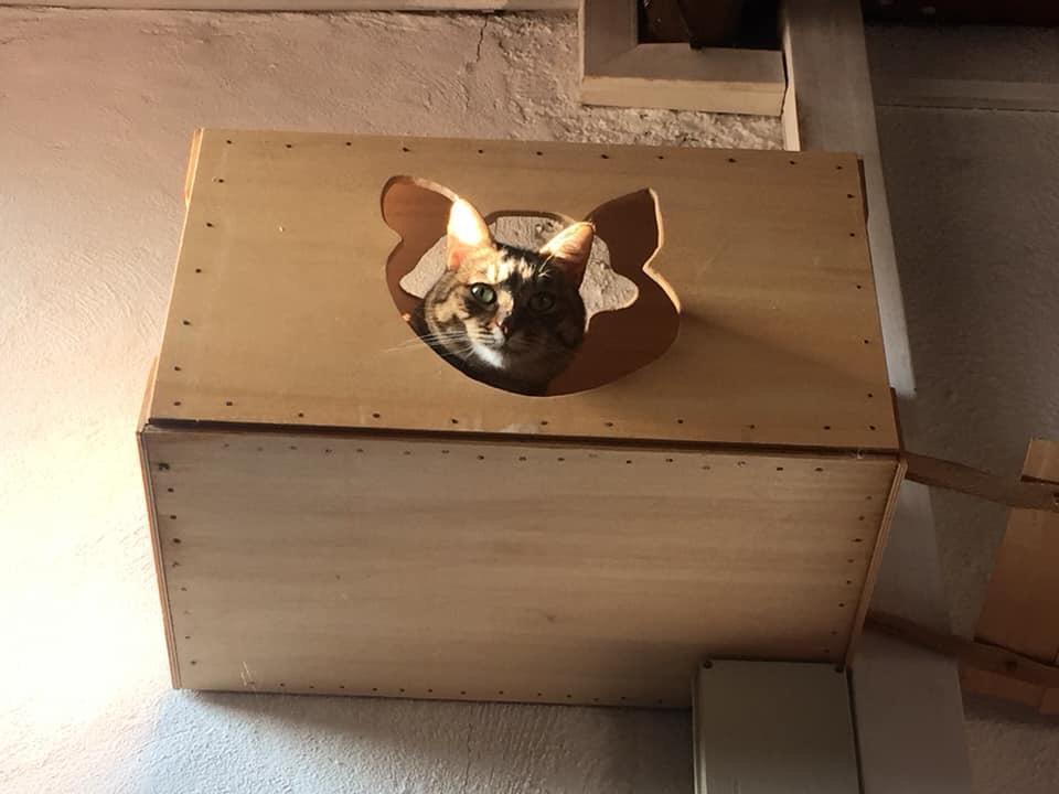 nicchia legno ventunesimo gatto