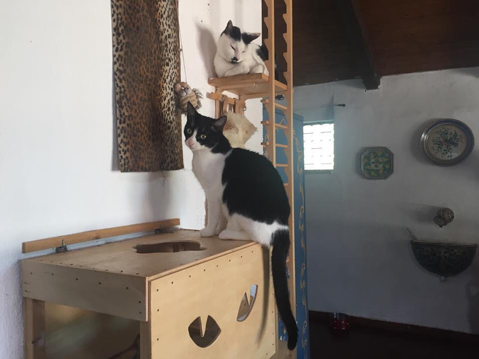 ventunesimo gatto