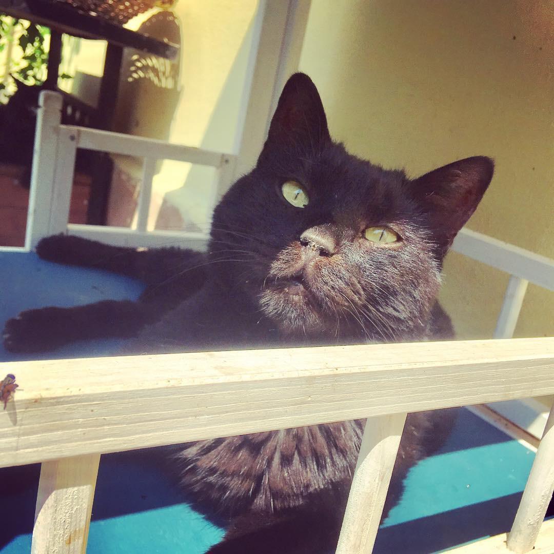 gatto puzza alito stomatite