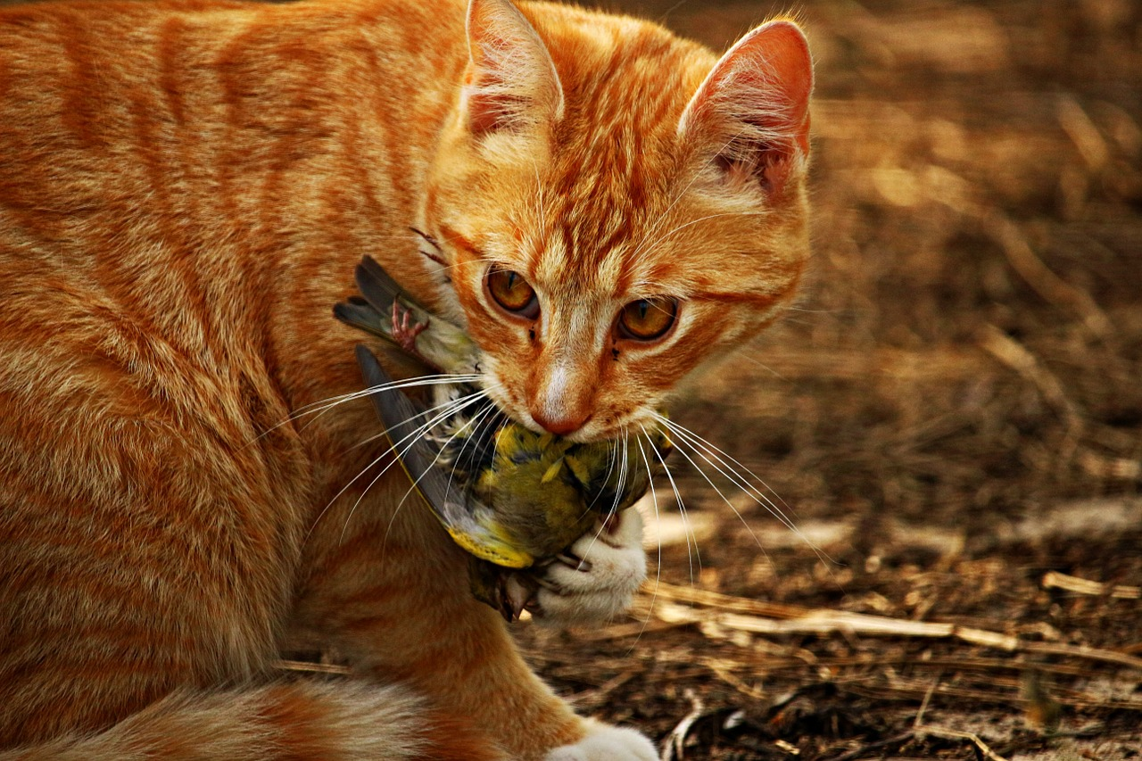 cibo preferito dei gatti croccantini