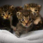 Parvovirus (gastroenterite virale) – Il vaccino salva la vita di cani e gatti