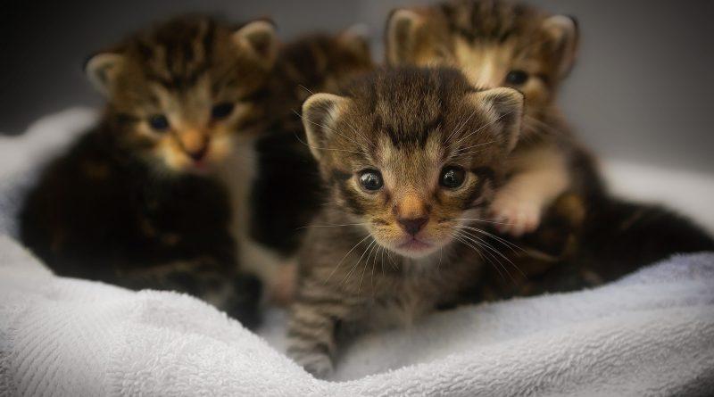 gastroenterite vaccino cani gatti (4)