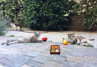 Inserimento nuovo gatto: cosa devi sapere prima di portare a casa un gattino nuovo