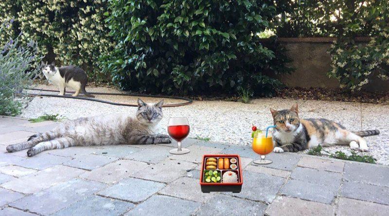 inserimento-gatto-adulto-e-gattino-nuovo