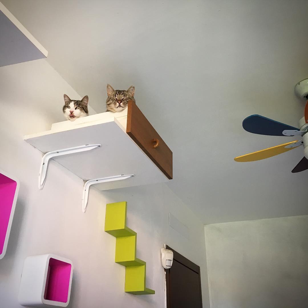 inserimento gatto adulto gattino nuovo convivenza (2)