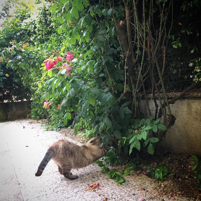 inserimento gatto adulto gattino nuovo inserimento