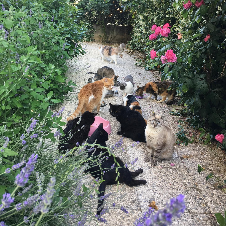 inserimento gatto adulto gattino nuovo convivenza