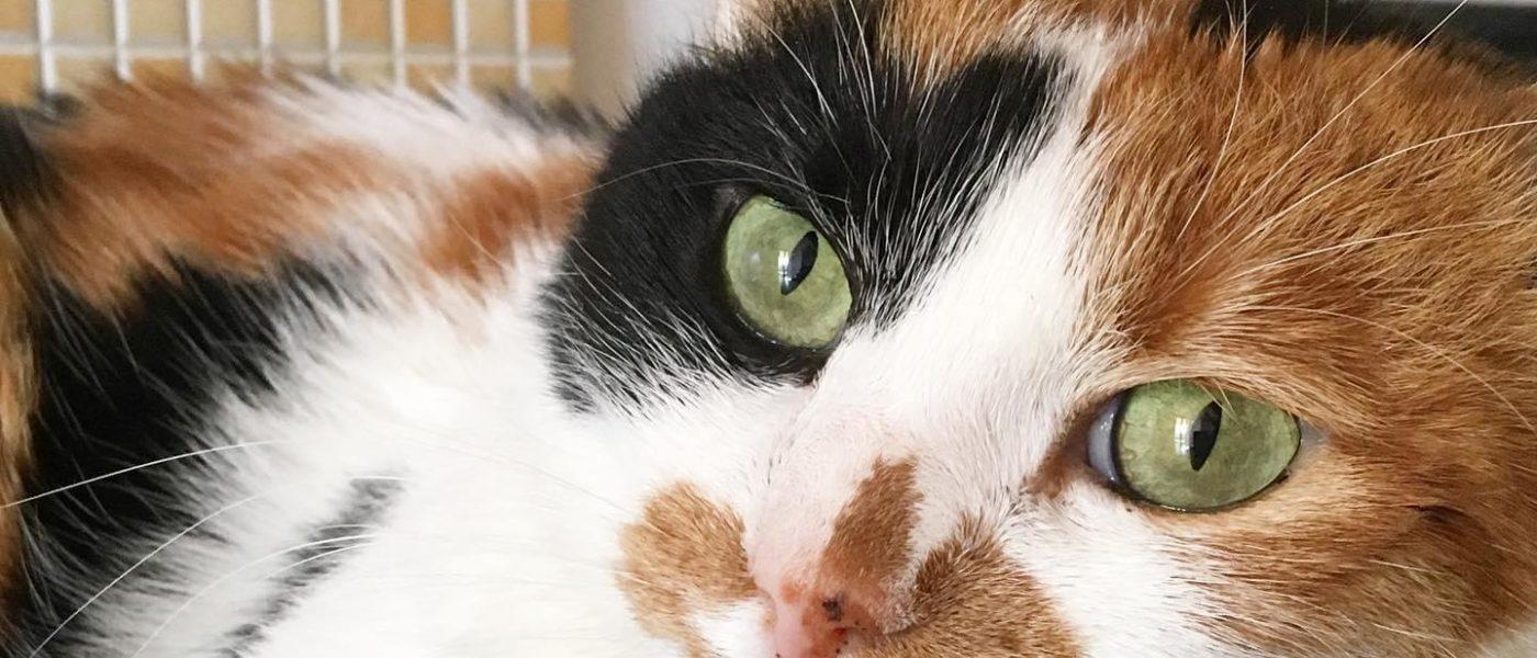 Perché nessuno compra più la lettiera tradizionale? Scopriamo le migliori lettiere per gatti
