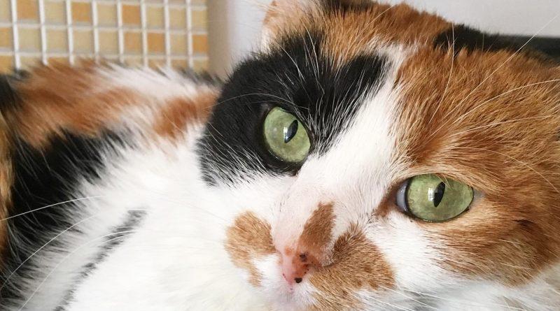 migliore lettiera per gatti