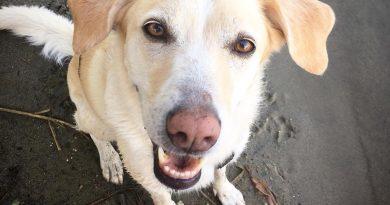 parvovirus cani gatti gastroenterite vaccino sintomi (2)