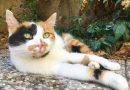 Perché ai gatti puzza l'alito? Attenzione a gengivite, stomatite e ulcere orali.