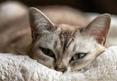 Cat Sitter – i nostri consigli per i tuoi gatti