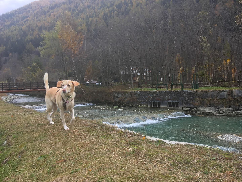 in vacanza con il cane in montagna 13