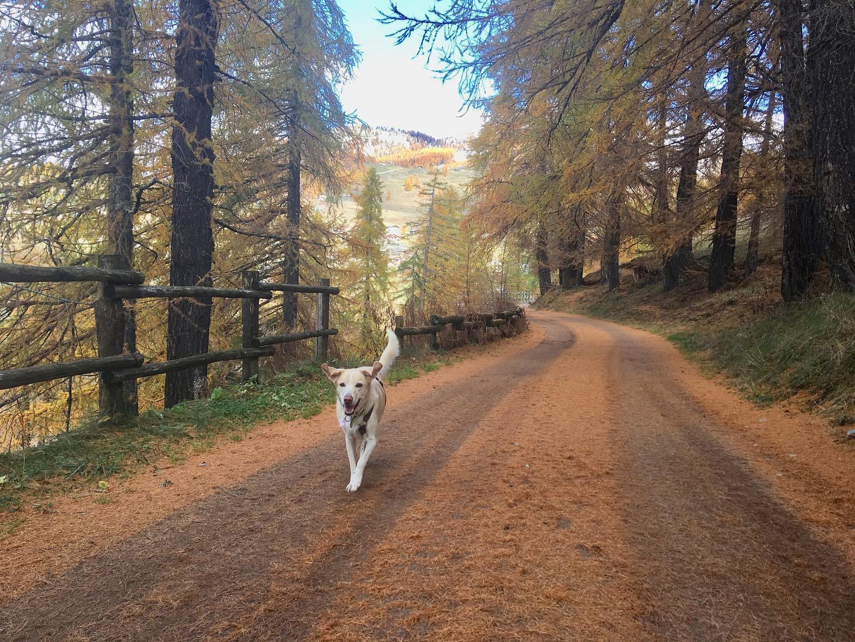 in vacanza con il cane in montagna 3