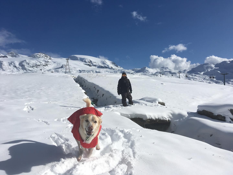 in vacanza con il cane in montagna 7