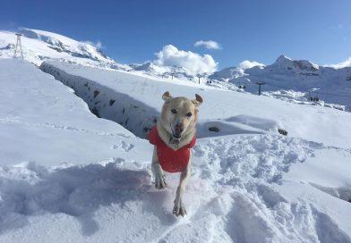In vacanza con il cane – In montagna