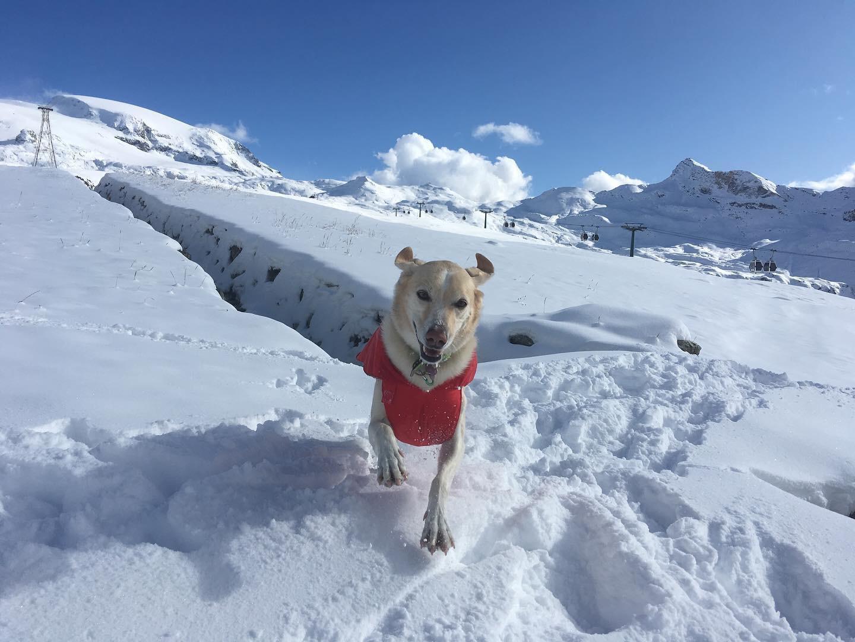 in vacanza con il cane in montagna 8