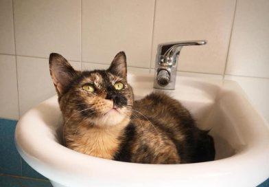 Gatte tricolore: scopri il carattere e le particolarità di queste gatte speciali