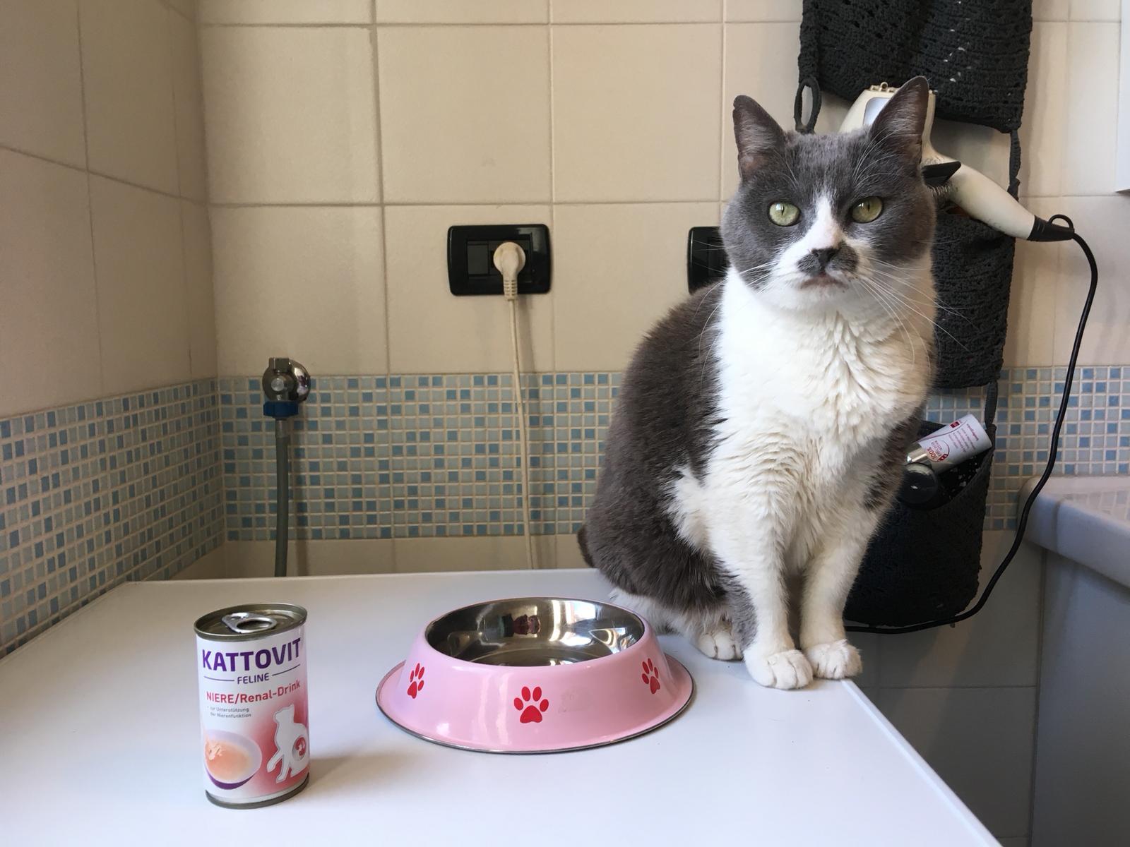 insufficienza renale gatti cibo appetibile
