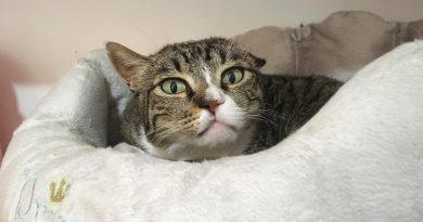 acari orecchie gatti cani 5