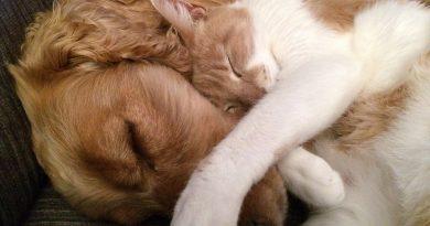 advantix-frontline-cani-gatti