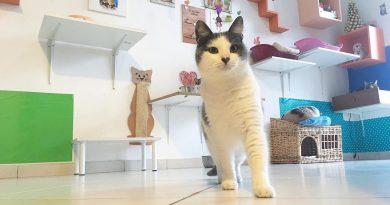 forfora gatti