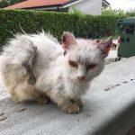 Gatti bianchi – Se li ami, li proteggi (e li tieni in casa)