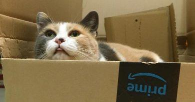 gatti scatole