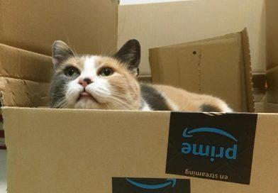 Etologia felina – Perché i gatti vanno pazzi per le scatole di cartone?