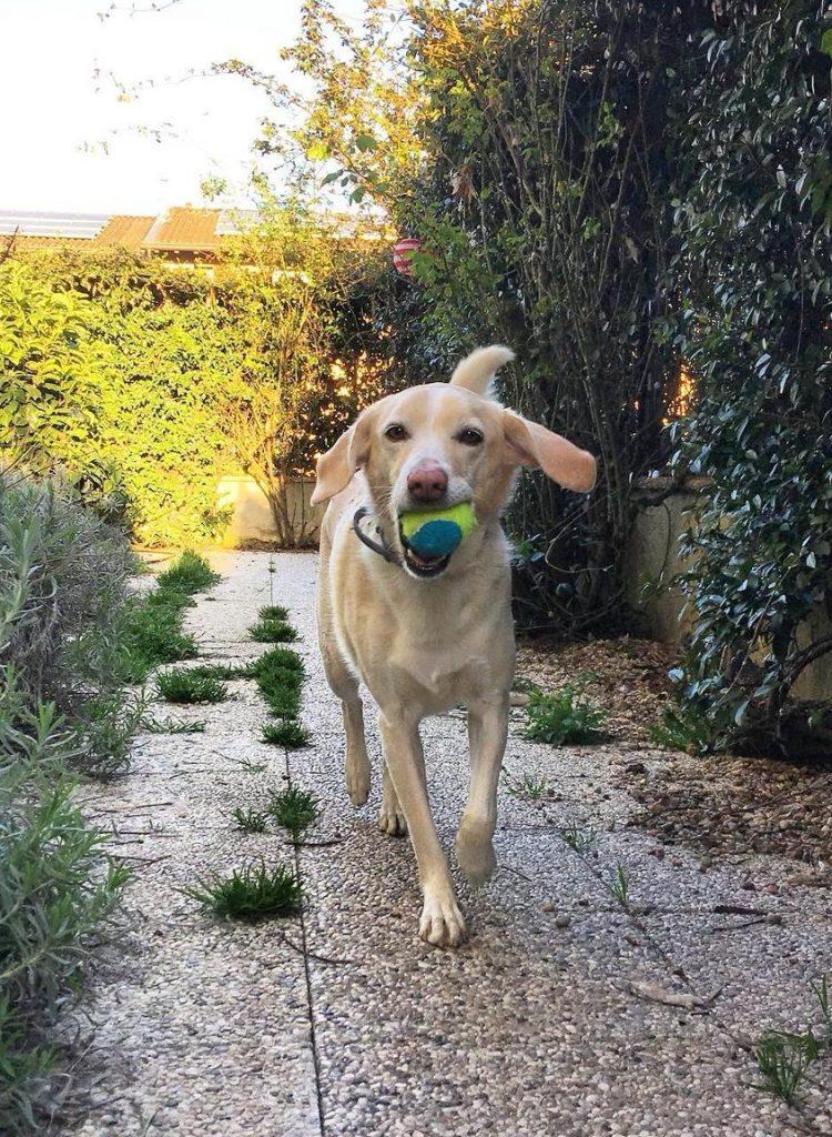 giochi-attivazione-mentale-cani-noia 2