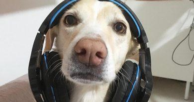 giochi-attivazione-mentale-cani-noia