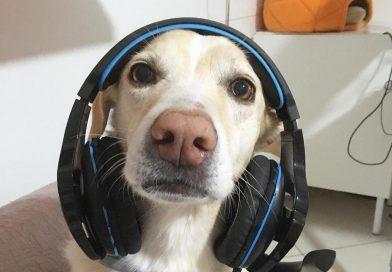 Smart Working per cani ai tempi del Coronavirus – giochi da fare a casa con il cane