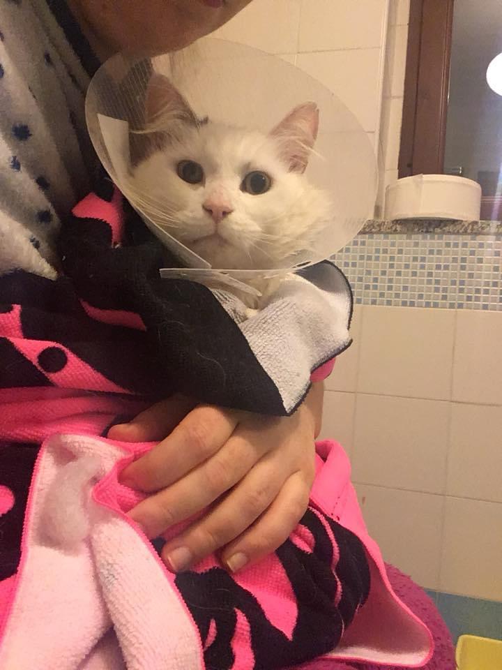 lavare gatti