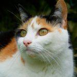 Piometra nel cane e nel gatto – Sintomi e prevenzione