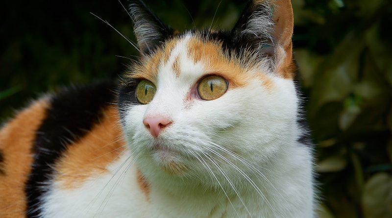 piometra cane gatto sintomi