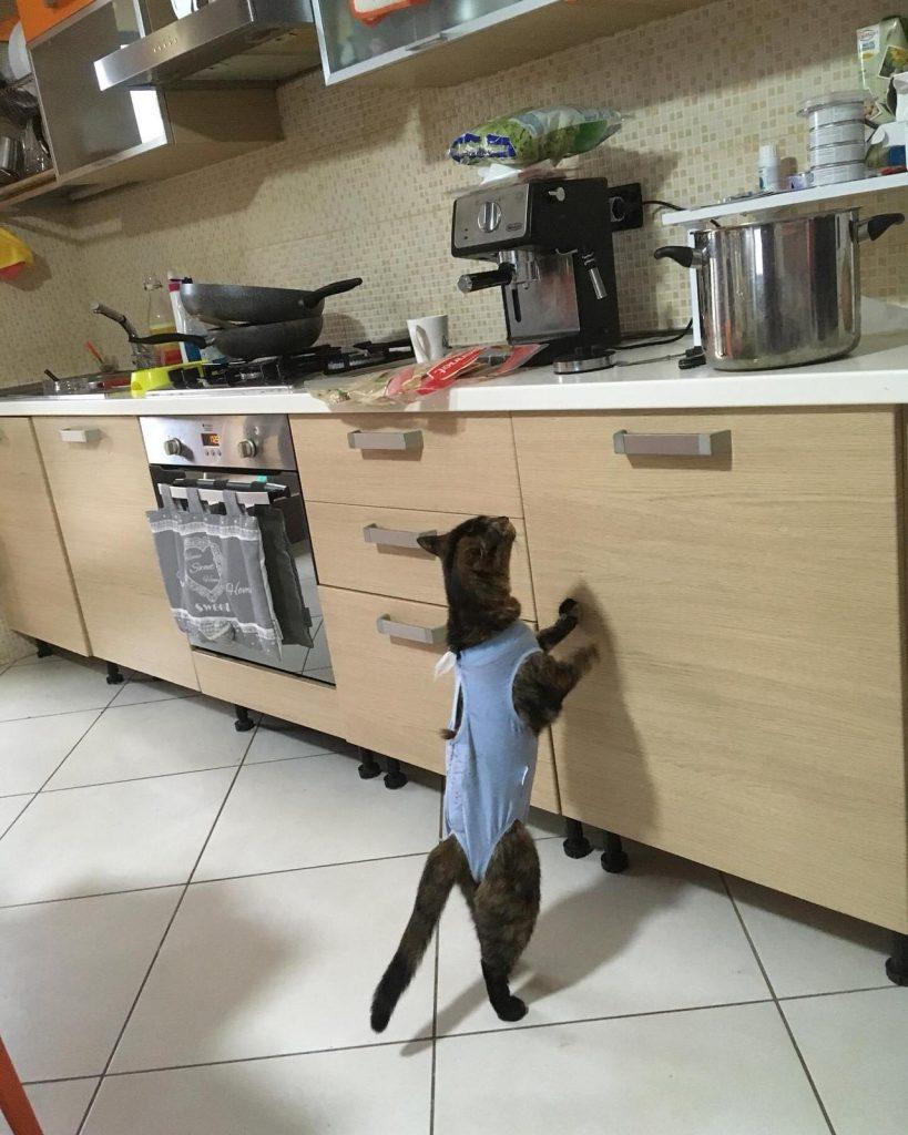 piometra sterilizzazione gatti