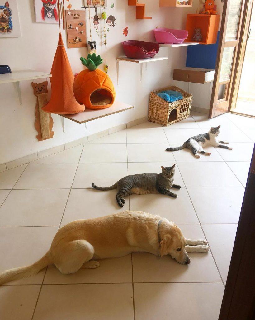 pulire casa gatti pipì